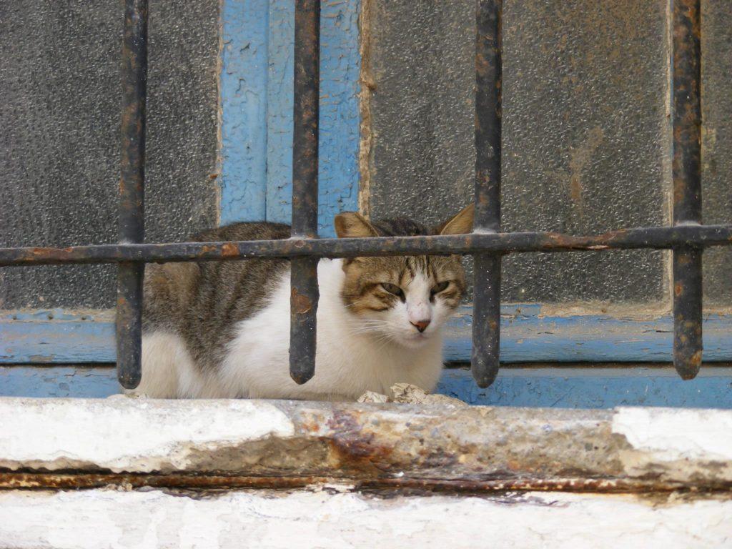 cats inside the Essaouira Medina.