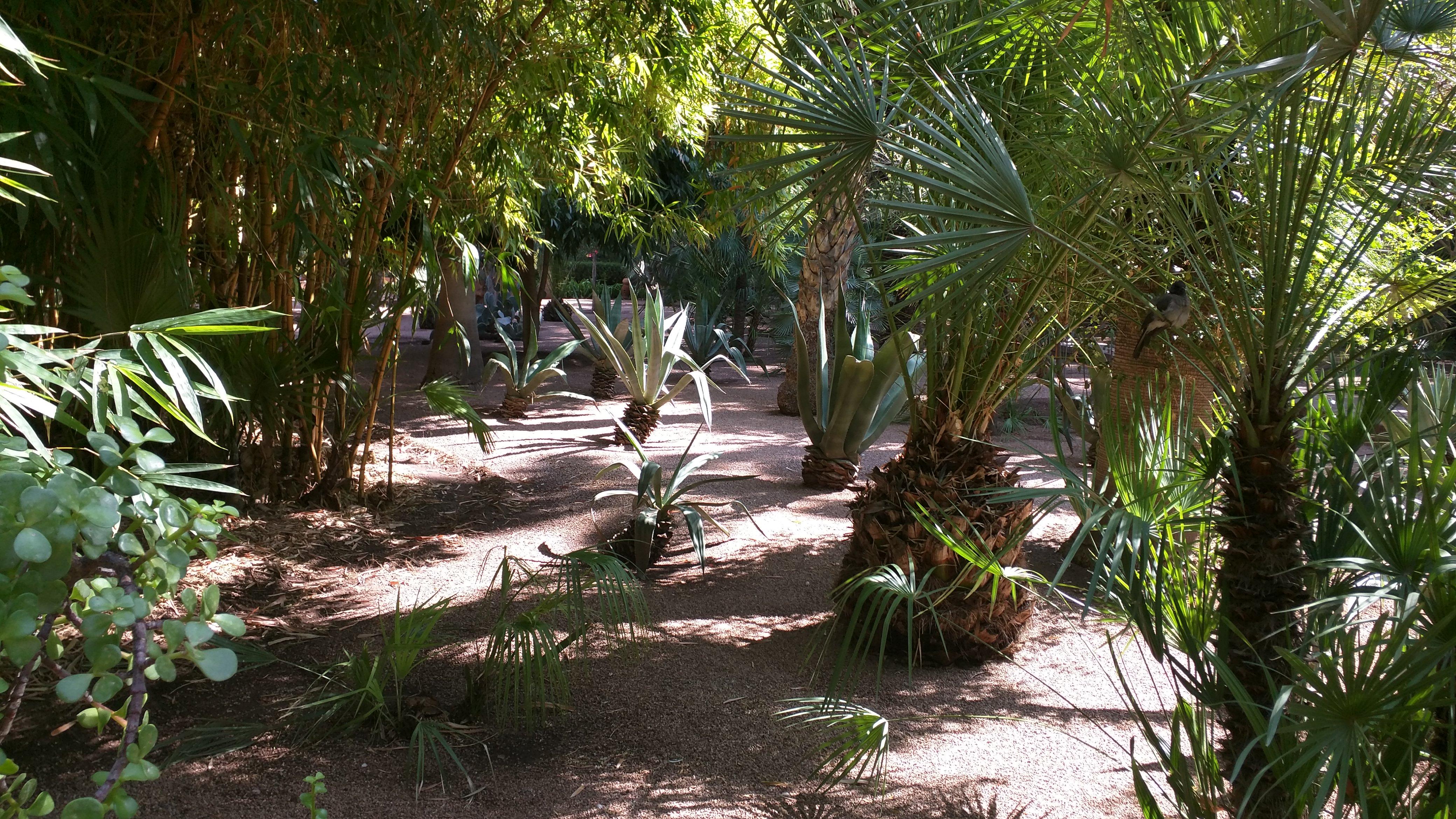 Jardin Majorelle.