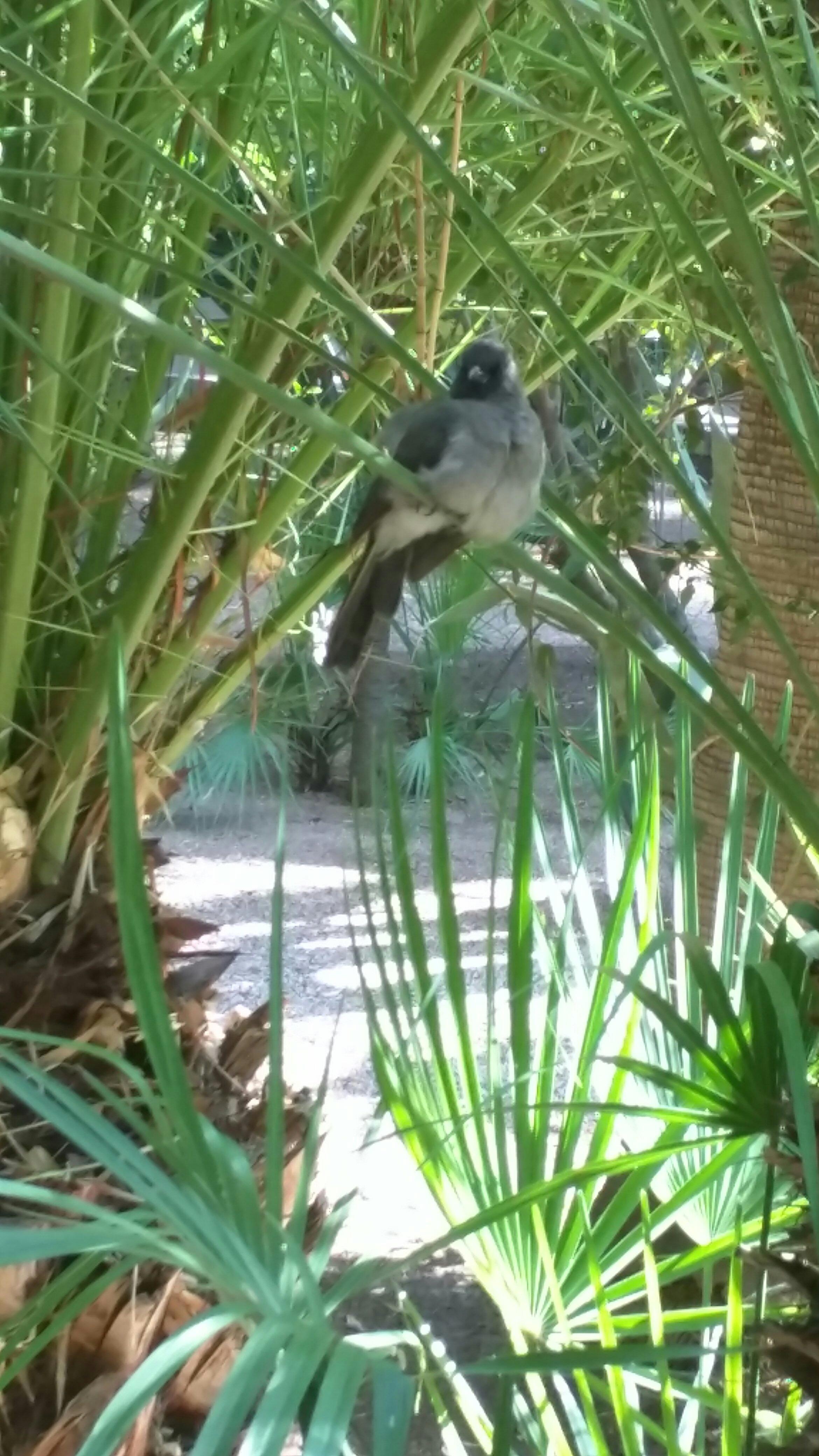 Birdlife inside Jardin Majorelle.