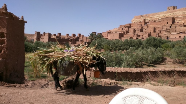 Donkey transport outside Aït Benhaddou.